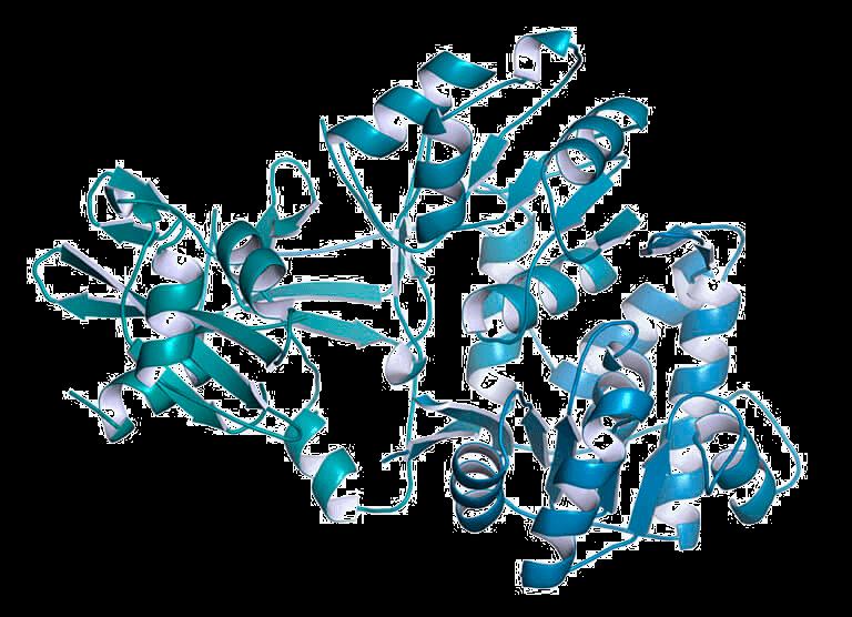 recombinant protein egineering