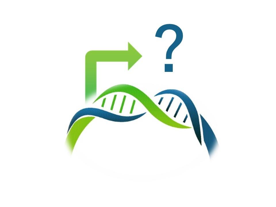 DNA promoter KIT