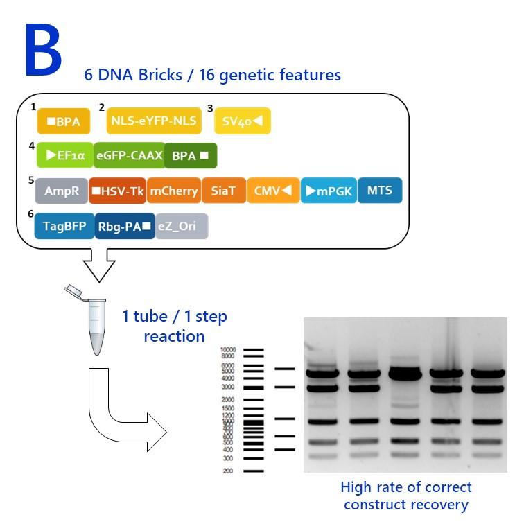 DNA bricks