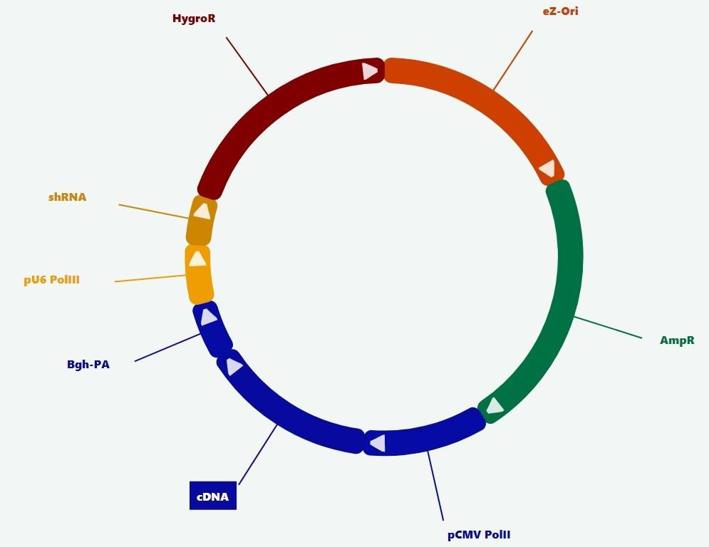 plasmid tool vector